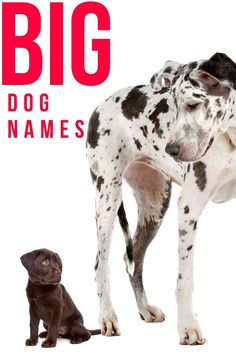 Whats your big dog called? Big Dog Names, Puppy Names, Best Big Dogs, Spotty Dog, Labradors, New Puppy, Mom And Dad, Your Dog, Dads
