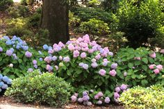 the Southern Garden (along with azalea and camilla) of garden design guru, Tara Dillard, the hydrangea is the perfect landscape plant (at least so long . Willow Tree Tattoos, Pine Tree Tattoo, Simple Tree House, Twig Christmas Tree, Tree Plan, Hydrangea Garden, Hydrangeas, Palm Tree Leaves, Peach Trees