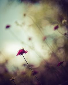 moody nature photography / flower floral bokeh by shannonpix