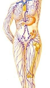 Gives a hint oabout joints and painful lymph nodes. inner knee, elbow, hip? lymphedema drainage   Lymphatic Drainage