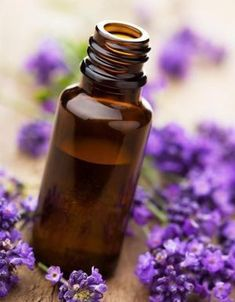 Lavender Essential Oil, easily one of the more popular essential oils. Most people can immediately recognize the lovely aroma of lavender essential oil. Using lavender to calm can be dated back to the ancient Romans. Lavender Essential Oil Uses, Lavender Oil, Lavender Fields, Lavender Flowers, Lavender Garden, Blue Flowers, Essential Oils For Colds, Young Living Essential Oils, Relaxing Oils