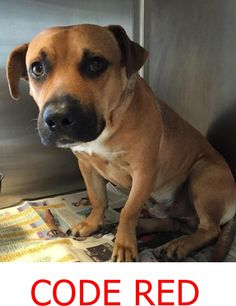 MURDERED --- MAX #A1808010 arrived to MDAS on 8/13, is approx 2 year old…