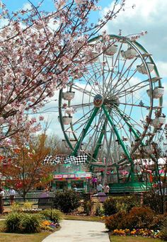 Macon Is In The Pink Springtime As 300000 Yoshino Cherry Trees Planted All Over