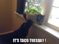 Everybody loves Taco Tuesday!