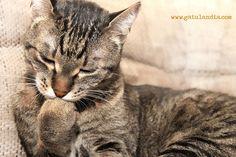 ¿Es realmente necesario bañar a tu gato?
