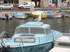 Mouette canal Sète
