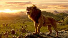 The Lion King movie trailers and photos. CGI re-imagining of the 1994 Walt Disney classic The Lion King. Le Roi Lion 4, Le Roi Lion Film, Le Roi Lion Disney, Watch The Lion King, Lion King Movie, Lion King Simba, John Oliver, Donald Glover, Streaming Movies
