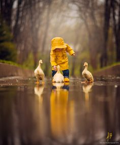 One Yellow Spring by Jake Olson Studios #Photography #Spring #Rain #Ducks