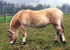 Horse Feed: How To Feed The Horse That Is Both Fat And Thin