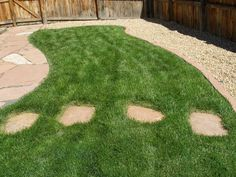 Dog Friendly Backyard Ideas no grass backyard for dogs grass was thriving not much and created Pawfriendly Landscapes An Interview With Owner Elizabeth Bublitz For A Beautiful Pet Friendly Yard