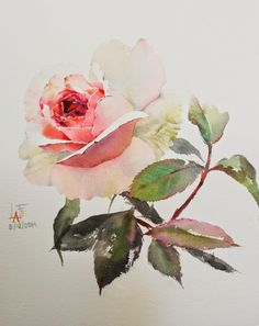 Exact rose I would want!! Half red/white watercolour painted (Alice In wonderland theme)