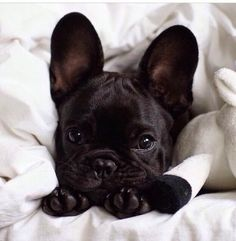 10 Dogs That Are Ideal For Small Apartments