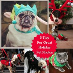 5 Tips for Great Holiday Pet Photos #Spon