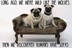 Funny #pug Dog Meme LOL