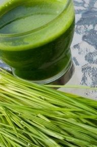 steps fro preparing a wheatgrass smoothie