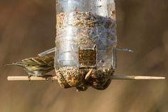 SERANTES NATURA: Comedero para aves casero