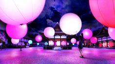 世界遺産、糺の森が光のアート空間に!(京都・下鴨神社) | TABI LABO