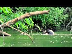 BBC Atlas of The Natural World - Wild South America season 1 episode 2