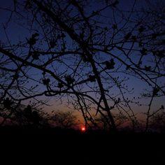 つぼみもいいかんじはるだわ  #tsubomi #cherryblossom  #sakura  #niigata  #sunset  #sky #iphoneonly #iphonegraphy #iphoneography #iosphotography #miniphotowalk #photowalk #photowalking #japan #japanese #instagram #fbp  #raw #dng