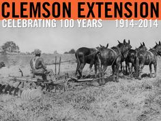Five-horse multiple hitch used on Clemson College farms in 1928. #ClemsonExt100