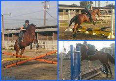 Moby & Big: Horses in Horsey Heaven #Horses #OTTB #Thoroughbreds