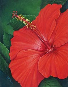 Red Hibiscus Painting by Barbara Ann Robertson