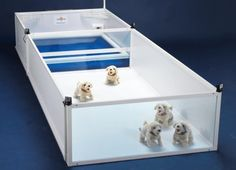 Whelping box revolutionises the rearing of pups