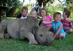 Adopted baby White Rhino, whose mother was killed by poachers