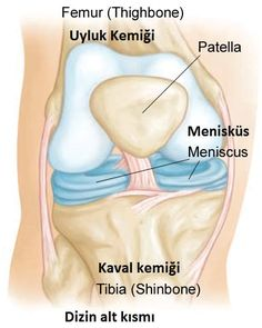 An MCL tear is a common knee injury causing inner knee pain. Find out about the main causes of MCL injury including symptoms & treatment options. Knee Ligaments, Ligament Tear, Knee Osteoarthritis, Torn Knee Ligament, Knee Ligament Injury, Bursitis Hip, Rheumatoid Arthritis Treatment, Knee Arthritis, Knee Injury Treatment