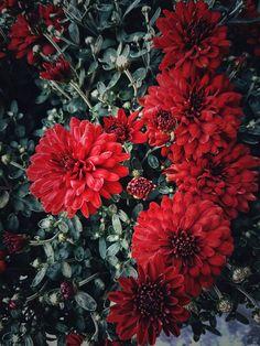 Day 211 - Flower Power.