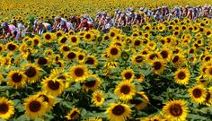 DBM Endurance - Biggest Shocker of 2013 Tour de France is That No Riders Tested Positive