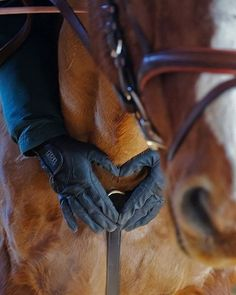 2,432 vind-ik-leuks, 6 reacties - Valencia Sport Saddlery (@valenciasaddlery) op Instagram: 'Four hooves. Love is in the air and it smells like hay 🌾🐴 Hugs and kisses this this week for our…'