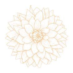 Dahlia flower tattoo designs