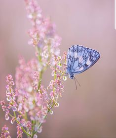 Butterfly Painting, Butterfly Wallpaper, Butterfly Art, Beautiful Bugs, Beautiful Butterflies, Beautiful Flowers, Beautiful Paintings Of Nature, Beautiful Nature Wallpaper, Cute Wallpapers