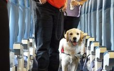 Flying With Dogs: Airline Approved Dog Crates and Carriers - Top Dog Tips