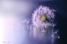 Lafugue Logos sets   Macro /  Fluff & feathers  ※Please do not use this…