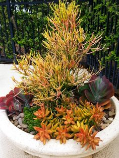 Propagation of Cacti and Succulents – Useful Tips