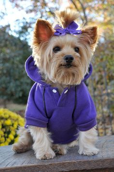 Our Dog Sport Hoodie for Pets is the perfect workout hoodie! Snap closure at the neck makes for easy on and off. Doggie Design Sports Logo and accented piping give this hoodie a truly sporty look. Gre
