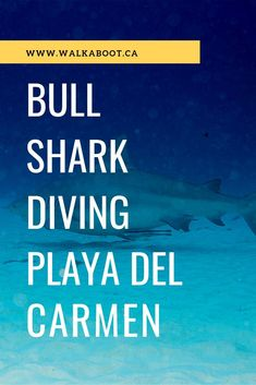 Bull shark diving in Playa del Carmen.Surviving scuba diving and feeding the great Bull Shark. Shark Diving, Best Scuba Diving, Sharks, Beach Trip, Vacation Trips, Vacation Spots, Beach Travel, Mexico Culture, Visit Mexico