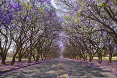 ruas-cobertas-flores-arvores-18