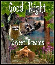 Good Night my friend! Good Night Cat, Good Night Thoughts, Good Night Funny, Good Night My Friend, Good Night Everyone, Good Night Image, Good Night Quotes, Morning Quotes, Good Night Blessings
