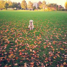 charlie :) loves to run! Running, Love, Racing, Amor, Keep Running, Jogging, Lob, I Like You