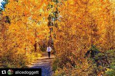 Fall in Shevlin Park in Bend, Oregon ---------------------  @alicedoggett with @repostapp.