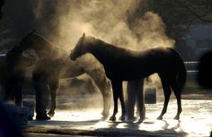 Steam rising of the horses after their run on the track. Horse Racing, Shots, Track, Horses, Artist, Animals, Animales, Runway, Animaux