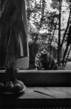 Hervé Guibert, Le chat, Villa Médicis, 1988