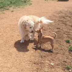 #tbt to the dog park! Do any pups remember this?