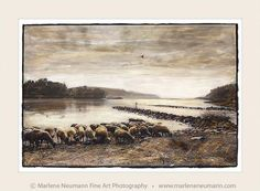 Fine art for your home River Mouth, Beach Walk, Fine Art Photography, My Images, Home Art, African, Black And White, Cows, Barefoot