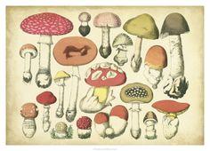 Vintage Mushroom Chart Giclee Print by Vision Studio at Art.com