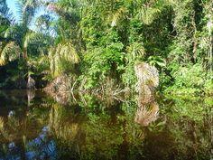 Jungle Life, Costa Rica, Plants, Plant, Planets