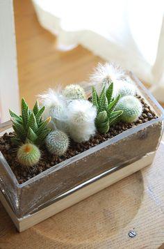 cactus planter-8-